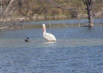Tourist Attraction - The Lagoon